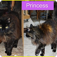 Adopt A Pet :: Princess - Duncan, BC