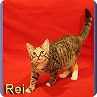 Adopt A Pet :: Rei - Aldie, VA