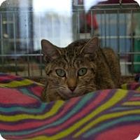 Adopt A Pet :: Angela - Martinsville, IN