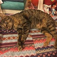 Adopt A Pet :: Simone - Clarkson, KY