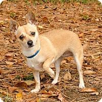 Adopt A Pet :: Edie - Brownsboro, AL