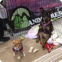 Adopt A Pet :: Susie & Tyco - Denver, CO
