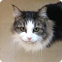 Adopt A Pet :: Eeva - Vancouver, BC