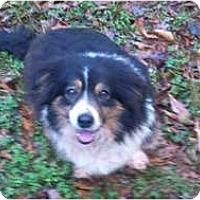 Adopt A Pet :: Baby - Murfreesboro, TN