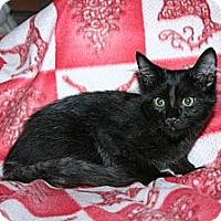 Adopt A Pet :: Zinfandel - Santa Rosa, CA