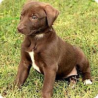 Adopt A Pet :: Jayne - Brattleboro, VT
