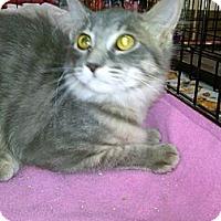Adopt A Pet :: Pulsar - Sterling Hgts, MI