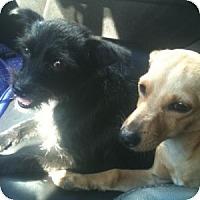 Adopt A Pet :: Bonnie (and Clyde) - Sacramento, CA