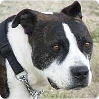Adopt A Pet :: Rye - YERINGTON, NV