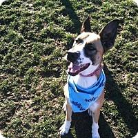 Adopt A Pet :: Loretta - Rohnert Park, CA