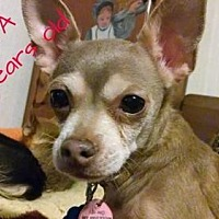 Adopt A Pet :: Chiquita - Fort Worth, TX