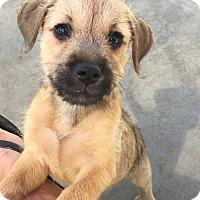 Adopt A Pet :: Risotto - Mission Viejo, CA