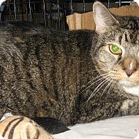 Adopt A Pet :: Big Bob - brewerton, NY
