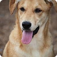 Adopt A Pet :: Spree Eakas - Cranston, RI