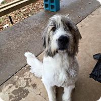 Adopt A Pet :: Sampson - Kyle, TX