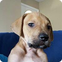 Adopt A Pet :: Rupert - Windermere, FL