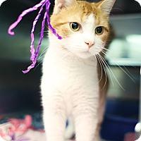 Adopt A Pet :: Jamison - Appleton, WI