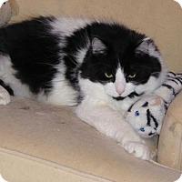 Adopt A Pet :: Raymond - Burlington, WA
