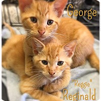 Adopt A Pet :: George - Richmond, VA