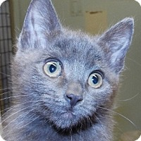 Adopt A Pet :: Mike - Grants Pass, OR