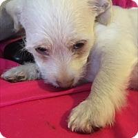 Adopt A Pet :: Wrangler - Las Vegas, NV