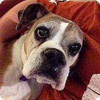 Adopt A Pet :: Daisy - North Las Vegas, NV