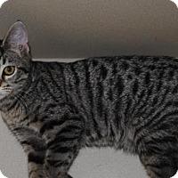 Adopt A Pet :: Quesaidilla - Ridgeland, SC