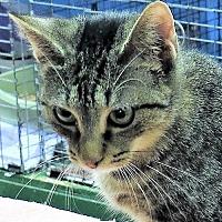 Adopt A Pet :: Brianna - Gonzales, TX