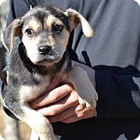 Adopt A Pet :: Pickles Grand Hyatt - Acworth, GA