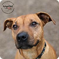 Adopt A Pet :: Sonic - Lyons, NY