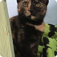 Adopt A Pet :: Torrie - Savannah, GA