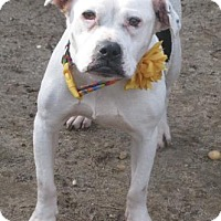 Adopt A Pet :: Athina - Voorhees, NJ