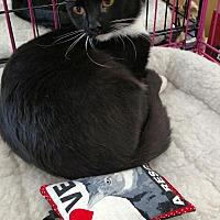 Adopt A Pet :: Fancy Nancy - Nuevo, CA