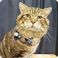 Adopt A Pet :: Professor - League City, TX