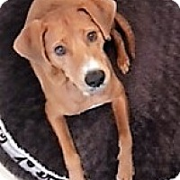 Adopt A Pet :: Chance, awesome outdoor dude - Snohomish, WA