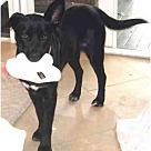 Adopt A Pet :: Debbie