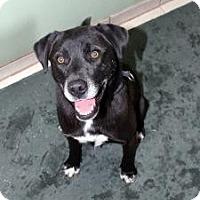 Adopt A Pet :: Inca - Cedar City, UT