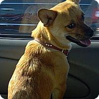 Adopt A Pet :: DeeDee - Phoenix, AZ