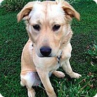 Adopt A Pet :: Molly - Sherman Oaks, CA