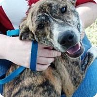 Adopt A Pet :: Moses - Vidor, TX