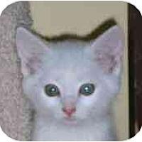 Adopt A Pet :: Sinai - Lombard, IL