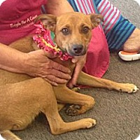 Adopt A Pet :: Buttercup - La Follette, TN