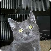 Adopt A Pet :: Steel - Lombard, IL