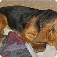 Adopt A Pet :: Teddy - Phoenix, AZ