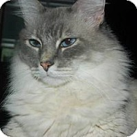 Adopt A Pet :: Donahue - Ennis, TX