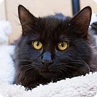 Adopt A Pet :: Ponyboy - Irvine, CA