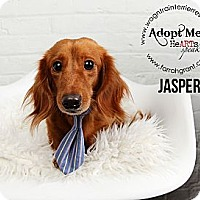 Adopt A Pet :: Sir Jasper - Omaha, NE