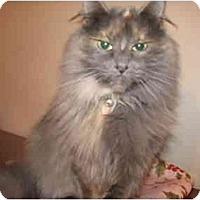 Adopt A Pet :: Gwen - Xenia, OH