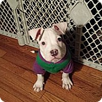 Adopt A Pet :: Ryder - Chicago, IL