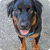 Adopt A Pet :: Susan - Ocean Ridge, FL